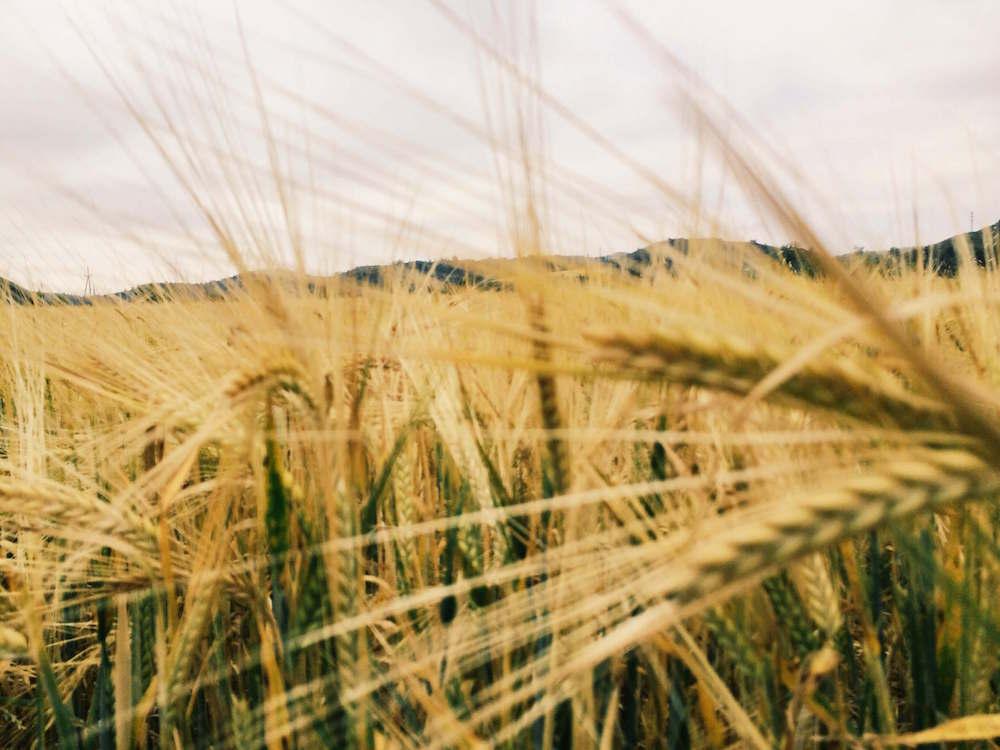 Cereals Almenar